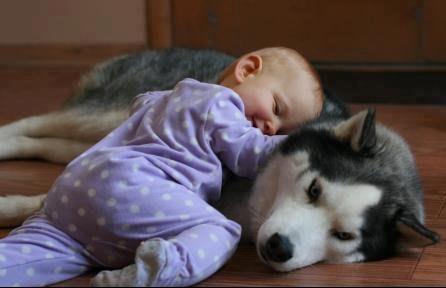 new_4136922__beautiful-dog-baby-dogs-32441571-446-288